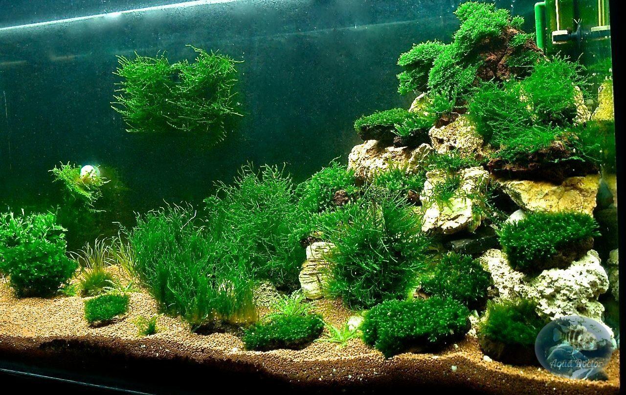Выращивание мхов аквариумных 16